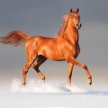 andalusian horses spain