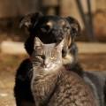 Animals of Algeria