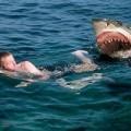 Australia Shark Attack