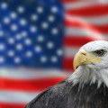 Amercian bald eagle flag