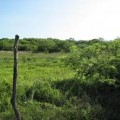 Buying Land Mexico