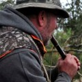 Jim Wrich of White Bear Lake works his Canada goose call during the Minnesota waterfowl opener Saturday, Sept. 22, 2012, on a field in Washington County. While hunters are killing as many Canada geese as ever, the population of birds that migrates through Minnesota has reached a record since the bird came back from the brink of extinction.(Pioneer Press: Dave Orrick)