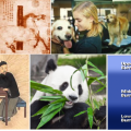 Chinese Herbal Veterinary Medicine