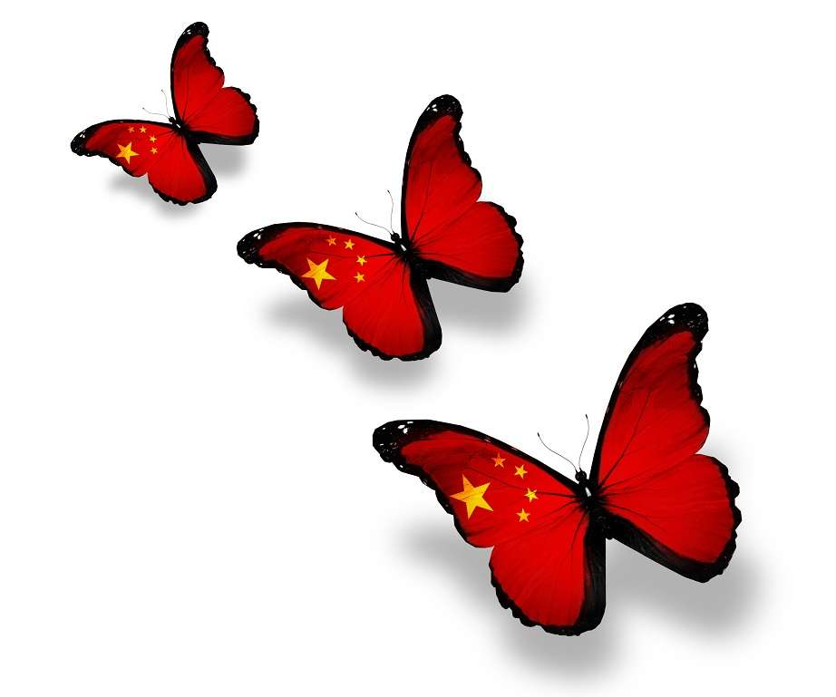 Three Chinese flag butterflies, isolated on white