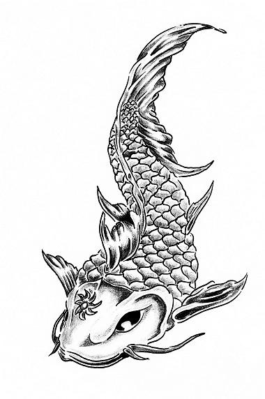 Hand drawing of koi carp