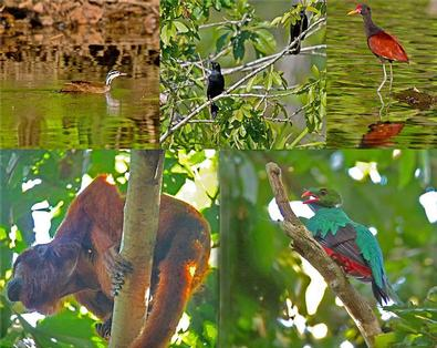 Cuba bird watching guide