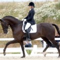 Danish Warmblood Horses