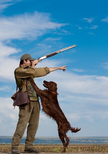 Irish setter training