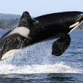 Long Beach Whale Watching Tours