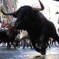 Running of The Bulls in Spain