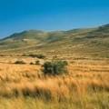 South African Grasslands