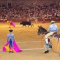 Matador and bull in bullfighting at Madrid