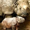Threatened Wildlife Of India