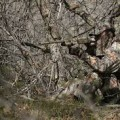 Turkey Hunting Secrets
