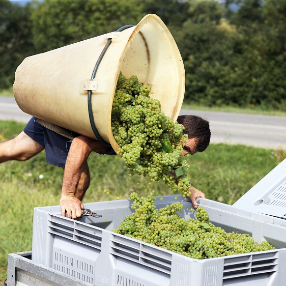 fruit picking work in France