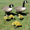 Canadian Geese Lawn Ornaments