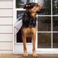 French Door Dog Doors