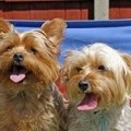 Dog-Friendly Wales Cottages