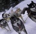 Breckenridge Dog Events