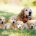 Dog Day Care Breckenridge