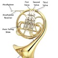 Double French Horn Parts