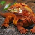 Machu Picchu And Galapagos Combined Tours