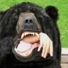big bear campgrounds