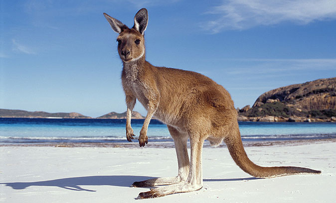 Download this Kangaroo Island Interesting Facts picture