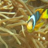 A Diver's Guide To Dahab