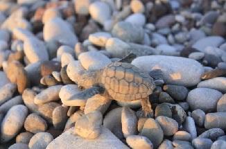 turtles-hatching