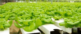 Hydroponic Equipment South Africa