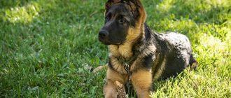 German Pet Names