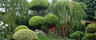 A Japanese tree garden