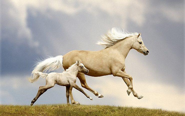 Native American Horse Symbolism
