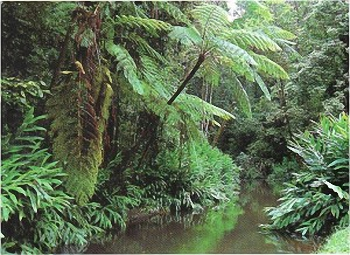 Rainforests of north Queensland